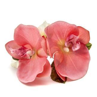 Pink_Beauty_Orchid_1024x1024_e0145a7a-11e0-427d-a32f-120a645c5053_grande